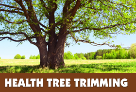 Health Tree Trimming